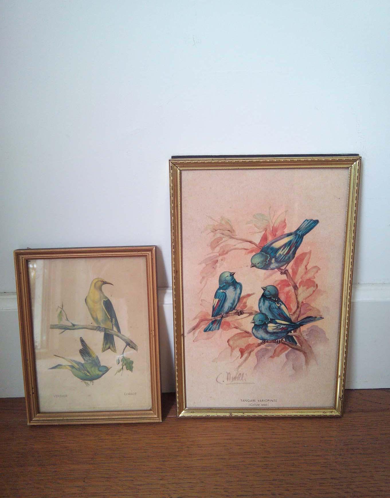 lot-cadres-oiseaux-1