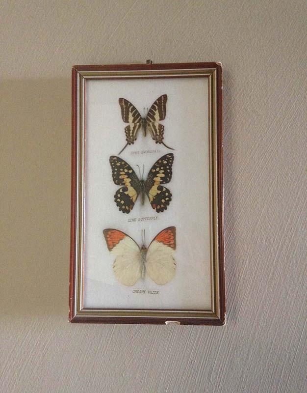 cadre-papillons-1-1