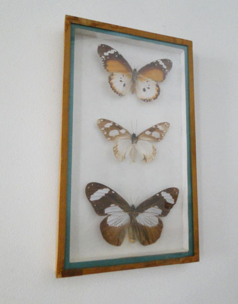 cadre-papillons-1
