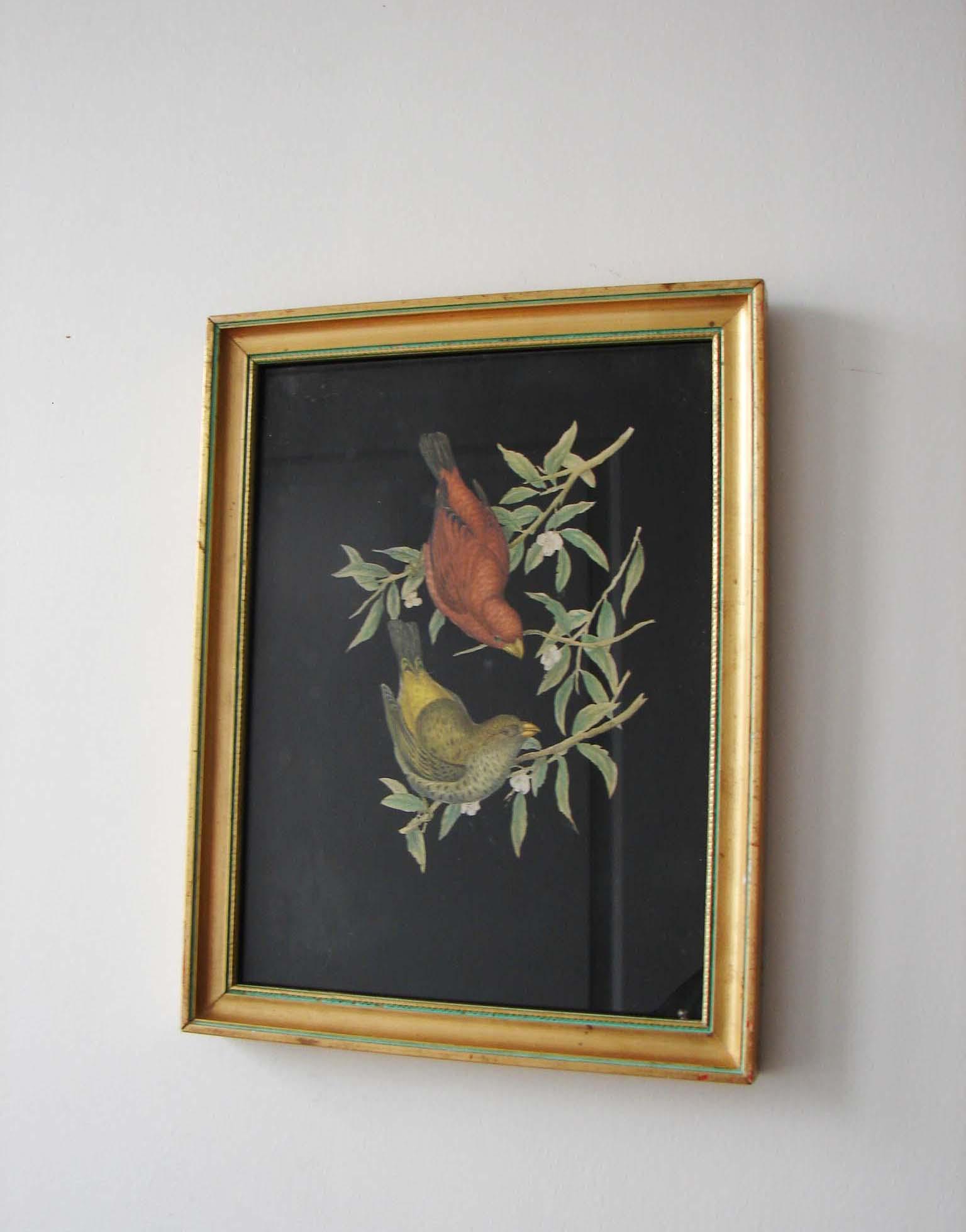 cadre-oiseaux-1